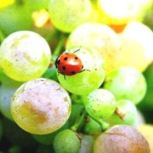 Vins naturels